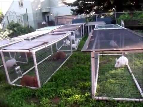 PVC Rabbit Tractors