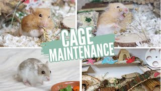 hamster+cages Videos - 9tube tv
