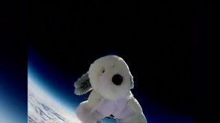 Sam the Dog missing after space trip