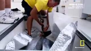 wicked tuna3-3