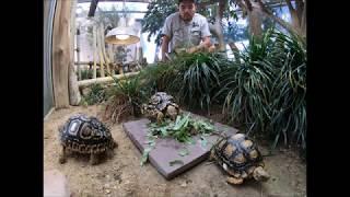 We're going inside our leopard tortoise crèche!