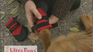 How to Put on Ultra Paws Dog Boots