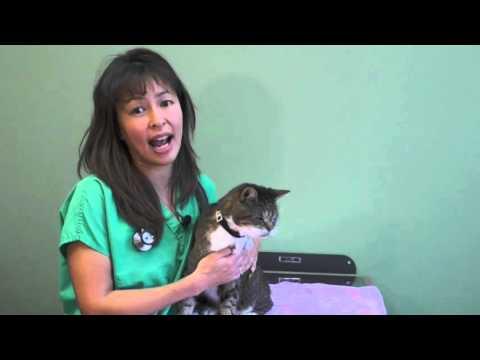 How to use an asthma Inhaler in your cat | Dr Justine Lee