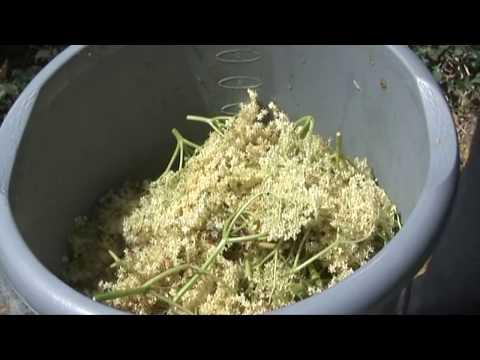 How to Make Elderflower Champagne - Quick & Easy Method