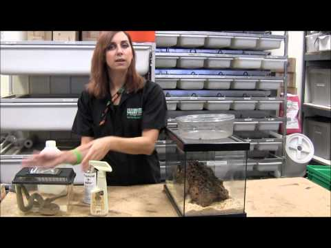 How to Treat Snake Mites