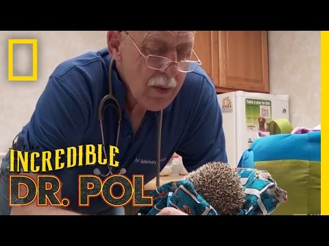 A Prickly Stink-uation | The Incredible Dr. Pol