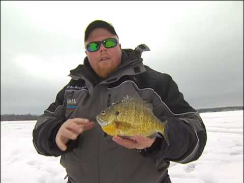 Predicting Fish Movement for Trophy Late Ice Perch and Bluegills