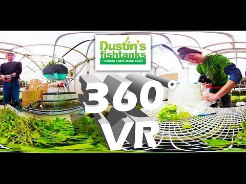 VR 360° Aquarium Plant Unboxing: Greenhouse Aquatic Plants