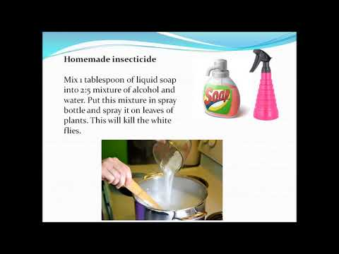 Organic home remedies for white flies removal