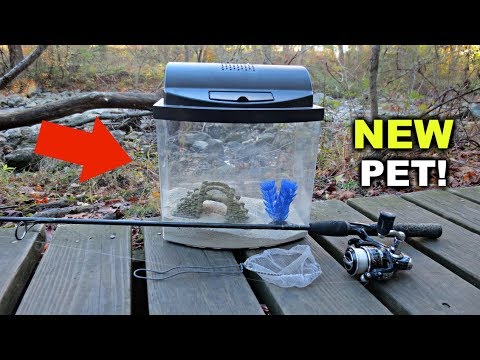 Finding a NEW PET in the Creek!!