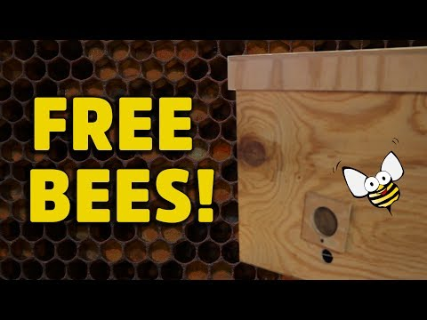 Build a swarm trap for catching wild honey bees! HNBEES #2