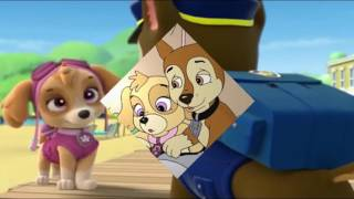 Chase x Everest tribute for Paw Patrol Cheverest Forever