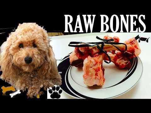 How to make RAW DOG BONES DIY Dog Food Diet - a tutorial by Cooking For Dogs
