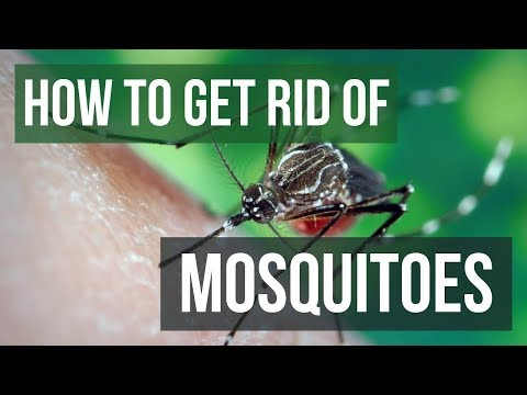 How to Get Rid of Mosquitoes in Your Yard (4 EASY Steps)