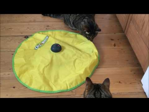 Keep your cat busy and active with Cats Meow!