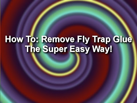 How to: remove fly trap glue - the super easy way!
