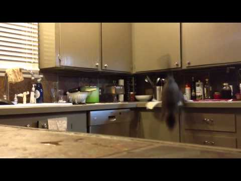 Trying to keep the cat off the kitchen counter using a method I saw on Reddit