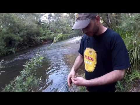 How to catch a fresh water crayfish