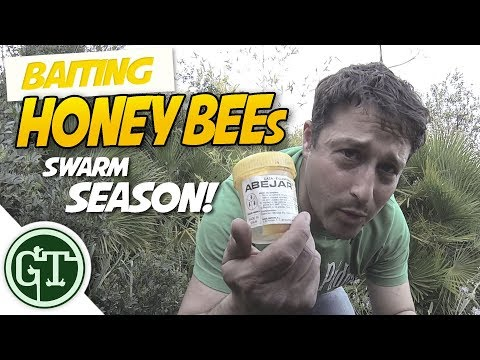 Baiting Honey Bees - Cleaning The Hive | Swarm Season 2018