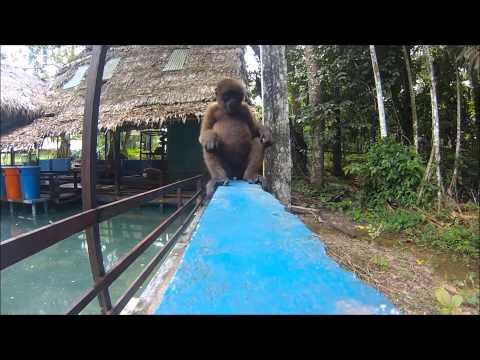 Iquitos, Peru - Amazon Rainforest