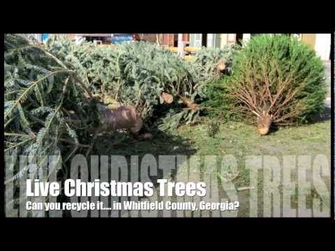 Can You Recycle It | Live Christmas Tree