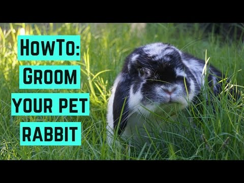 HowTo: Groom Your Pet Rabbit