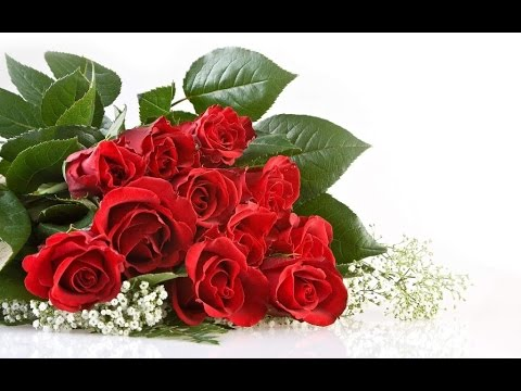 beautiful rose -  beautiful rose quotes