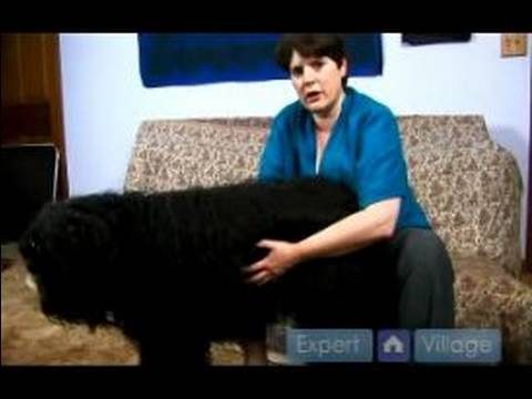 Dog First Aid : Recognizing Symptoms of Bloat in Dogs