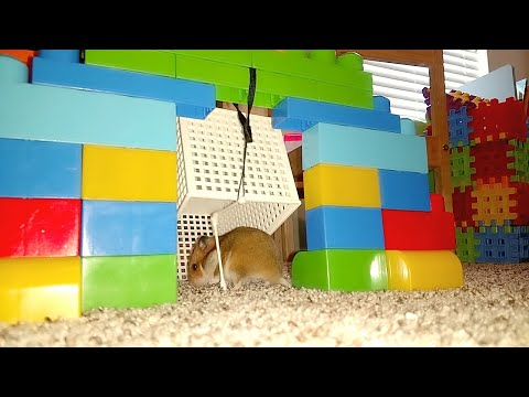 Hamster Live Trap