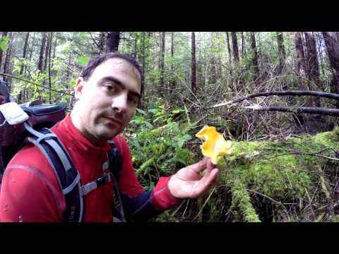 How to Find Chanterelle Mushrooms Vancouver Island