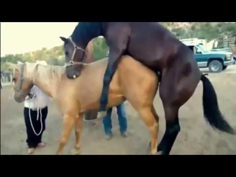 Xxx Mp4 Animal Breeding Horse Mating Breeding At Home So Pro 3gp Sex