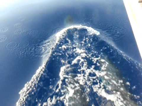 Unreal dolphin video on the way from Sardegna to Ustica, Sicily