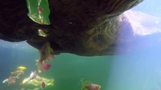 GoPro on a Turtle!