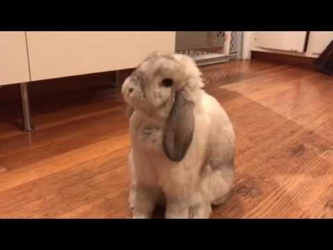 Adorable Ear Cleaning