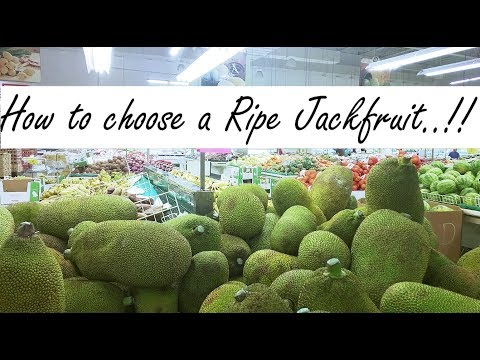 How to select a Ripe Jackfruit || Tips to Pick the RIGHT one ..!!