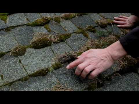 Do you have Moss on your Roof?
