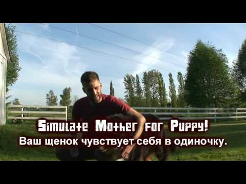 18) Fake a puppy mother! - Domestic Tricks