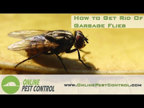 How to get rid of Garbage Flies (House Flies)