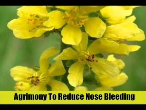 8 Effective Herbal Remedies For Nose Bleeding