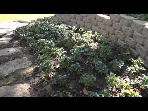 Easy Landscaping Tips for Erosion Control