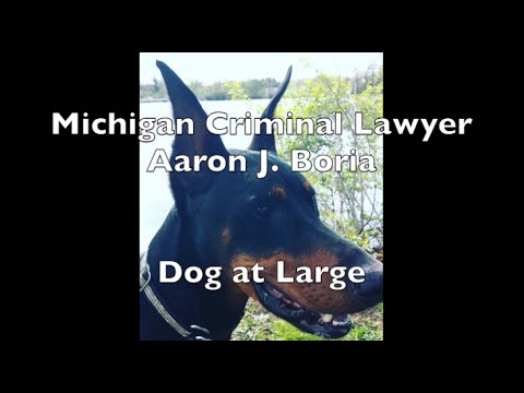 Dog at Large Lawyer - Vicious Animal Livonia - Livonia Lawyer