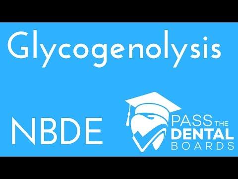 Glycogenolysis - Biochemistry - NBDE