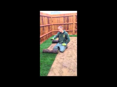 How to lay turf in the winter: new lawn in winter