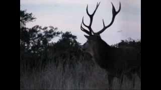 Red Deer at Richmond Park