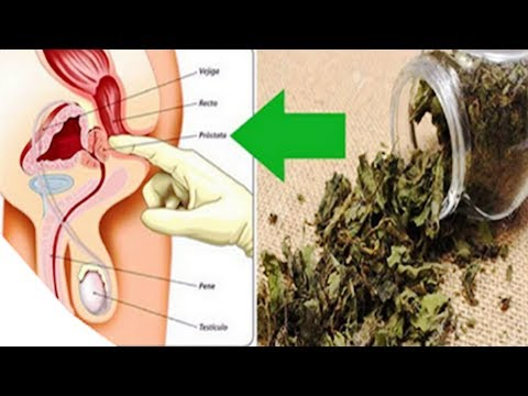 This Plant Disinflames the Prostate, Prevents Cancer and Removes Diabetes