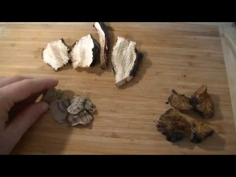 How to: harvest and dry medicinal mushrooms Turkey Tail, Reishi and Chaga