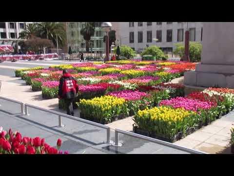 American Tulip Day Union Square San Francisco California 2018