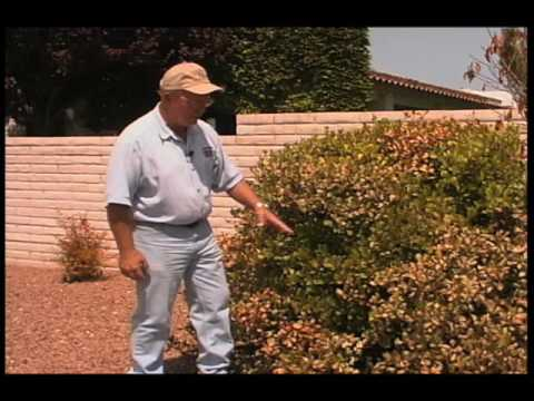 How To Identify Tree Damage From A Natural Gas Leak