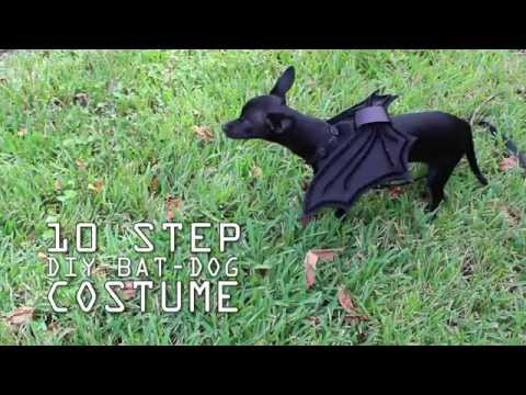 10 Step DIY Bat Costume Tutorial for your Pet