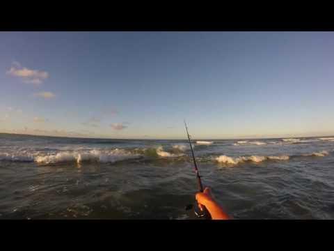 Spanish mackerel fish Cape Hatteras NC / Buxton Point